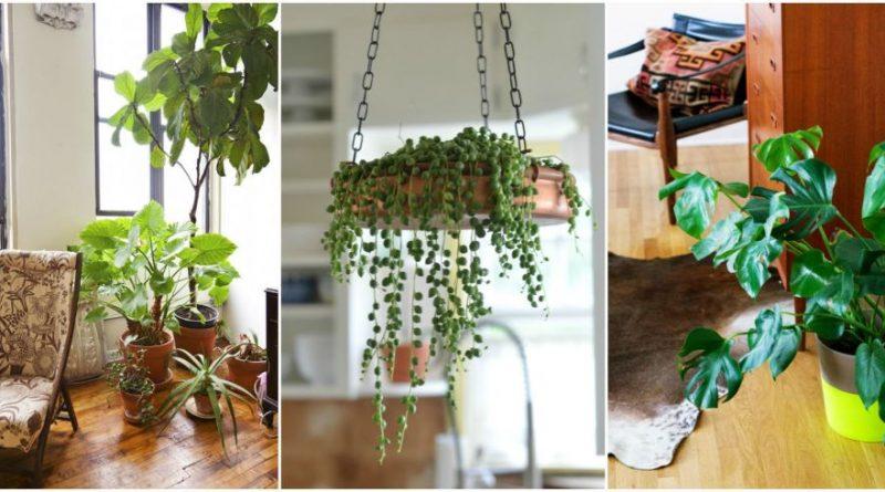 Vuoi ridurre lo stress prova con le piante colore torino for Top 20 indoor plants